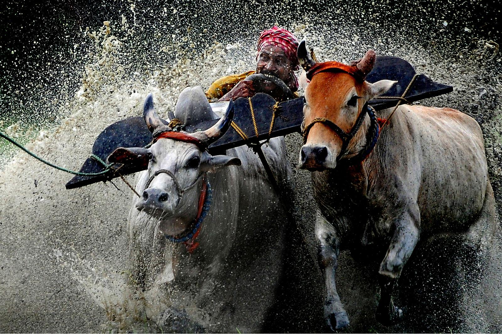 Intian Visa Online - maanviljelijä Monsoonissa